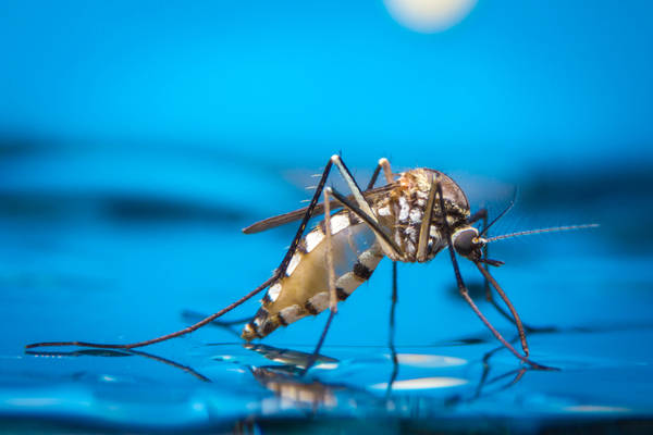 Zika a new occupational risk factor for Canadians